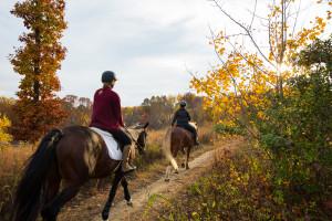 Horseback Riding in Houston