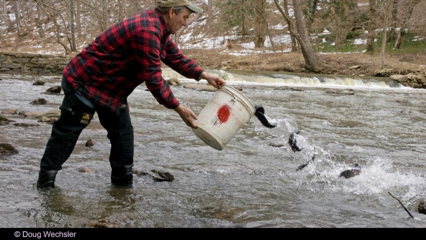 Director's Notebook: Trout Fishing in the Wissahickon - Friends of